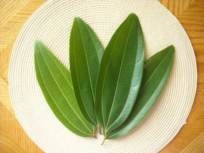 treat-diabetes-mango-leaves-2